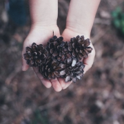 Family Craft: Pinecone Bird Feeders